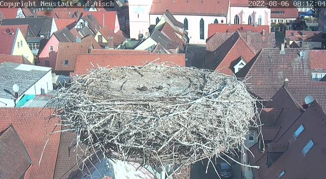 Webcam Storchennest Röttenbach